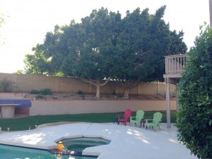 Backyard view from the west